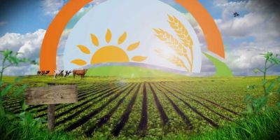 Toprak Solucanının (Eisenia Fetida) Etlik Piliç Yetiştiriciliğinde Alternatif Protein Kaynağı Olarak Rolü